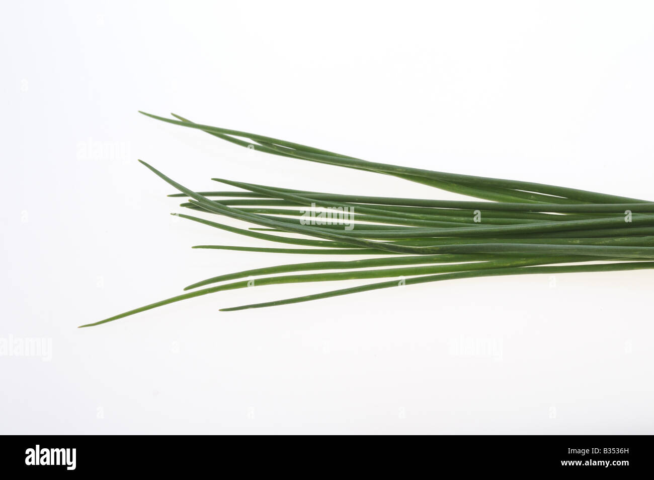 CULINARY HERBS HERB CHIVES Allium shoenoprasum related to the onion chives have milder flavour and the leaves are - Stock Image