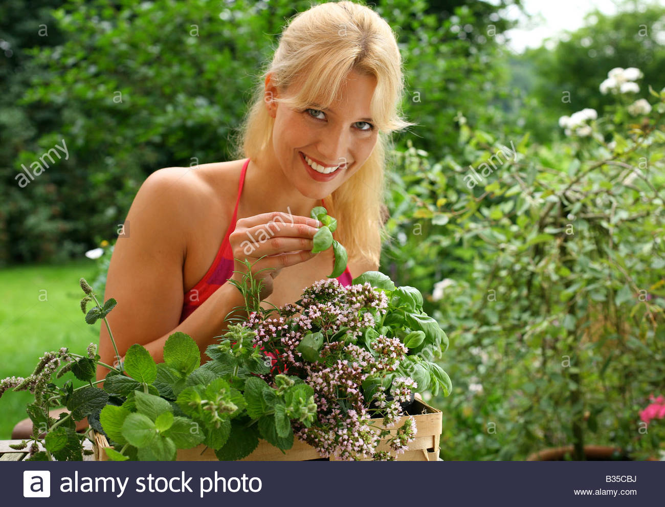 young blond woman picking herbs in the garden Stock Photo
