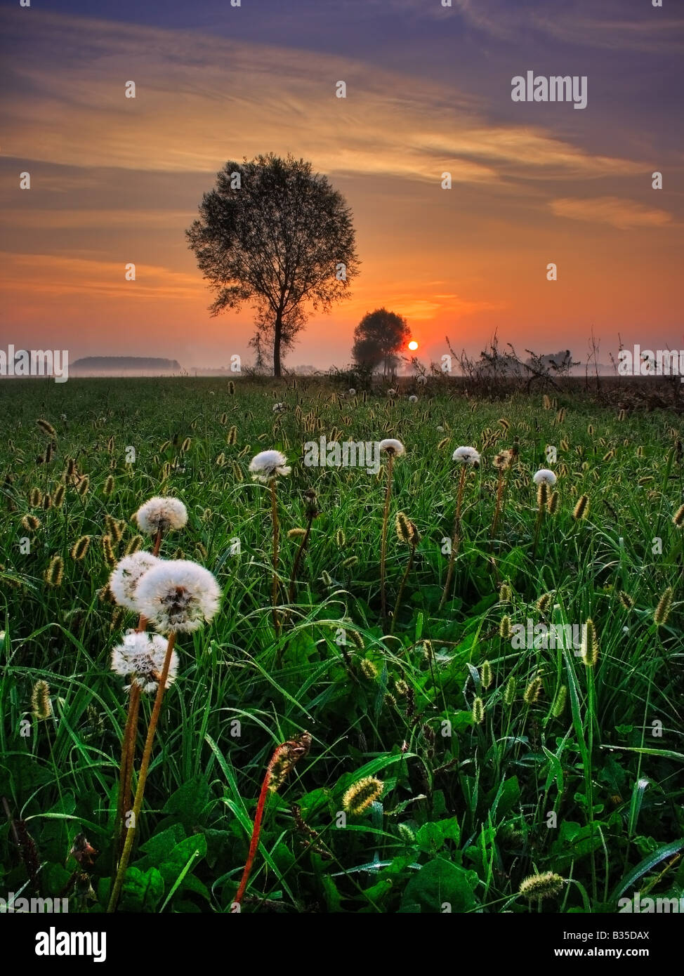 A grassfield featuring some dandelions set on a circle and the warm tones of the rising sun in the eastern sky. - Stock Image