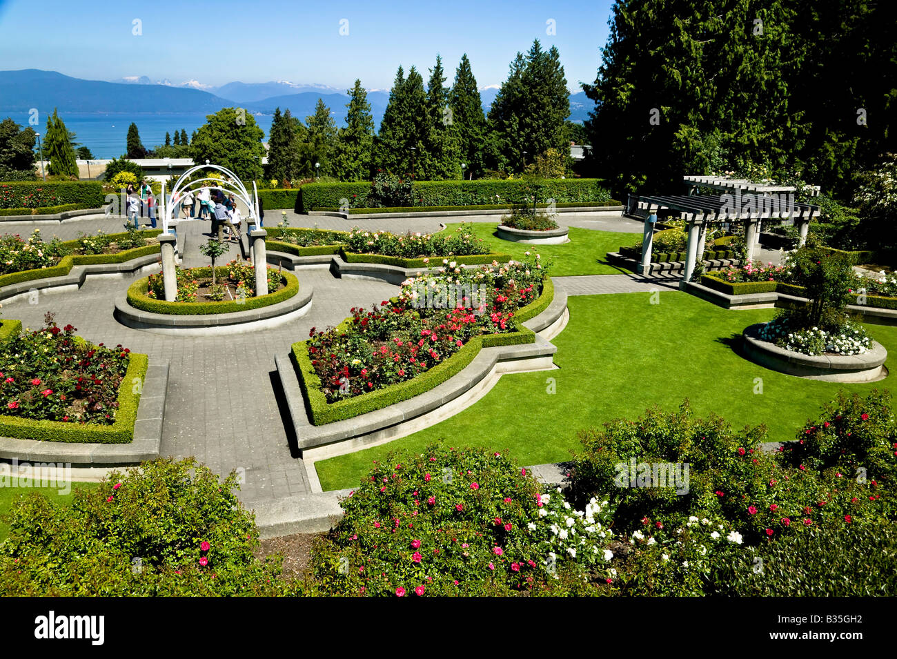 Good UBC Rose Garden Vancouver BC Canada   Stock Image