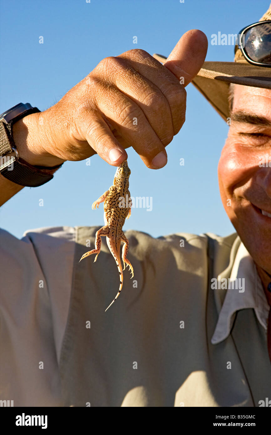Shovel snouted sand diving lizard dangles from finger of guide during safari tour near Swakopmund Namibia - Stock Image