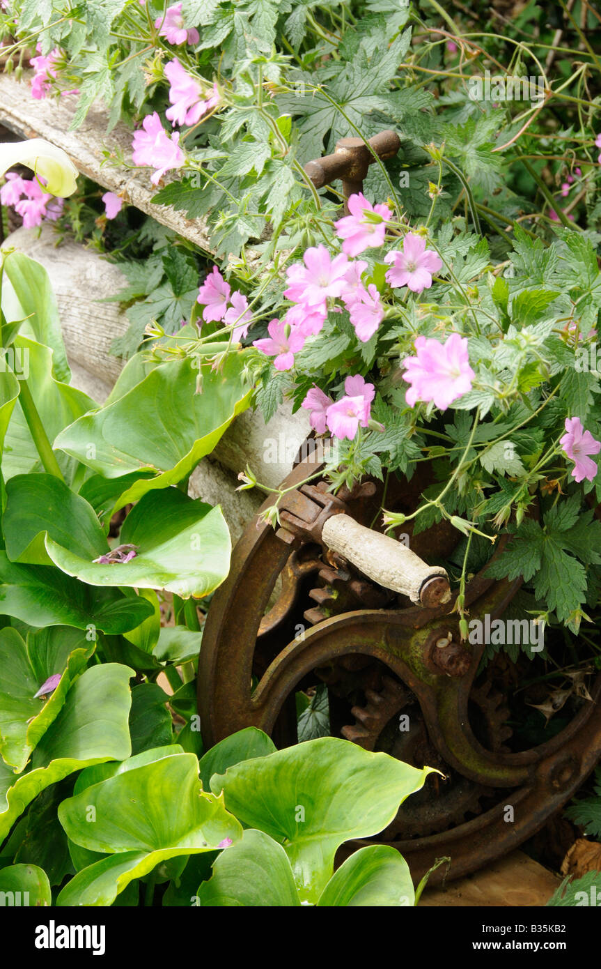 Rustic garden setting with old mangle Cranesbill and Arums - Stock Image