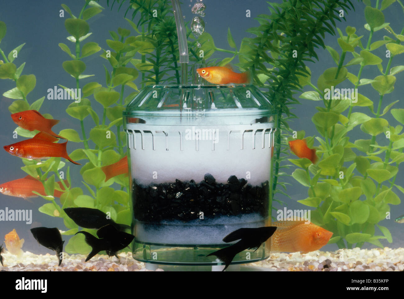 aerating and filtering aquarium with carbon filter stock photo