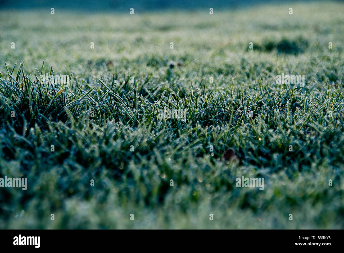 Dewy lawn - Stock Image