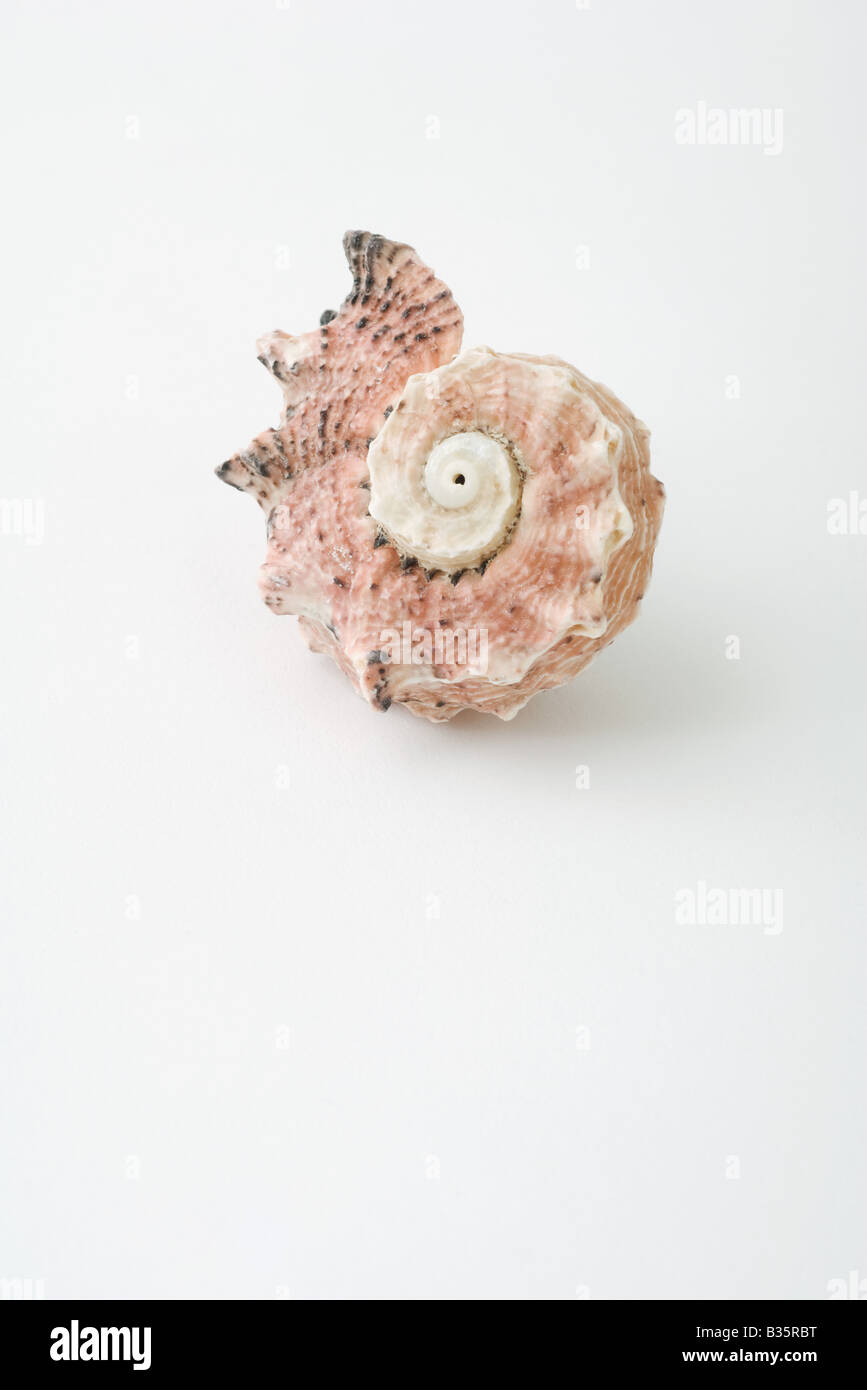 Seashell, close-up - Stock Image