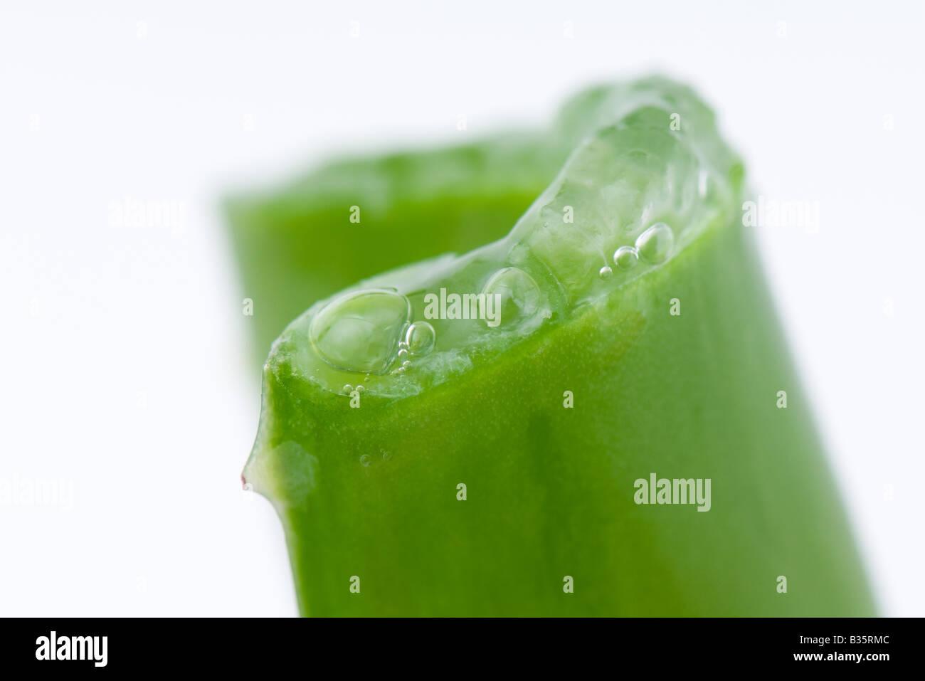 Aloe vera leaf and gel, close-up - Stock Image
