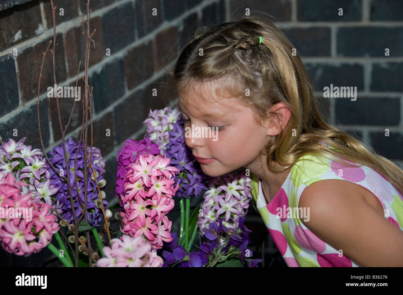 A young caucasian girl, age 5 years, leans over to smell purple and pink Hyacinth blooms. USA. - Stock Image