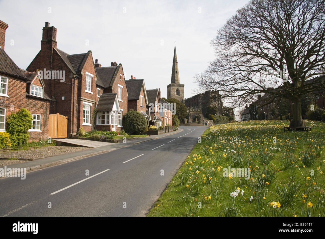 Astbury Cheshire England UK April The houses are set around the daffodil covered triangular village green in this - Stock Image