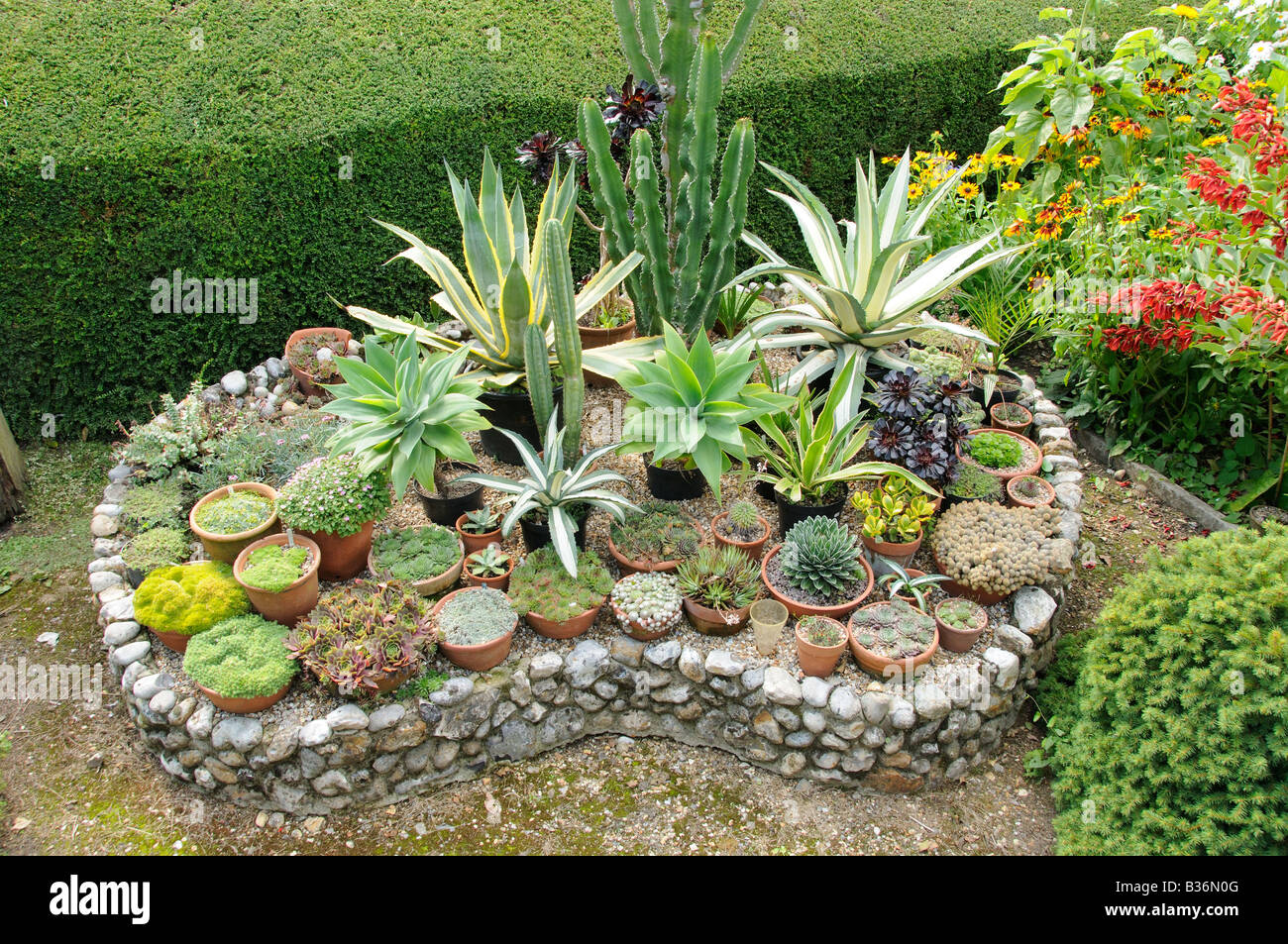 Outdoor Display Of Potted Sempervivums And Succulents On A Raised Bed Stock Photo Alamy