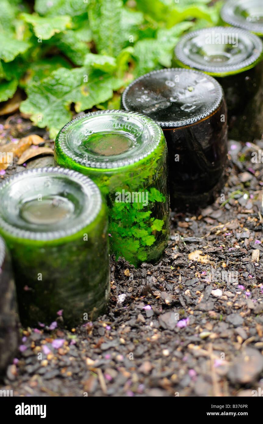 Ferns naturalised inside bottles used as path edging feature Norfolk UK - Stock Image