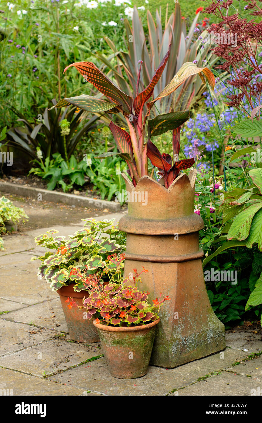 Canna Lily In Reclaimed Chimney Pot With Geraniums In Pots