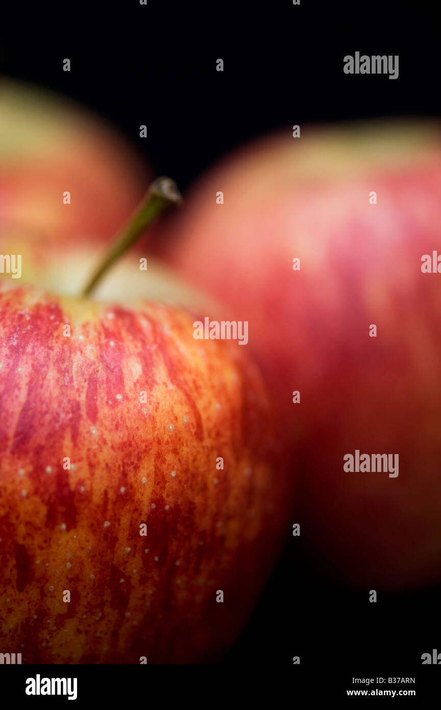 Malus domestica. Royal Gala apples against a black background - Stock Image