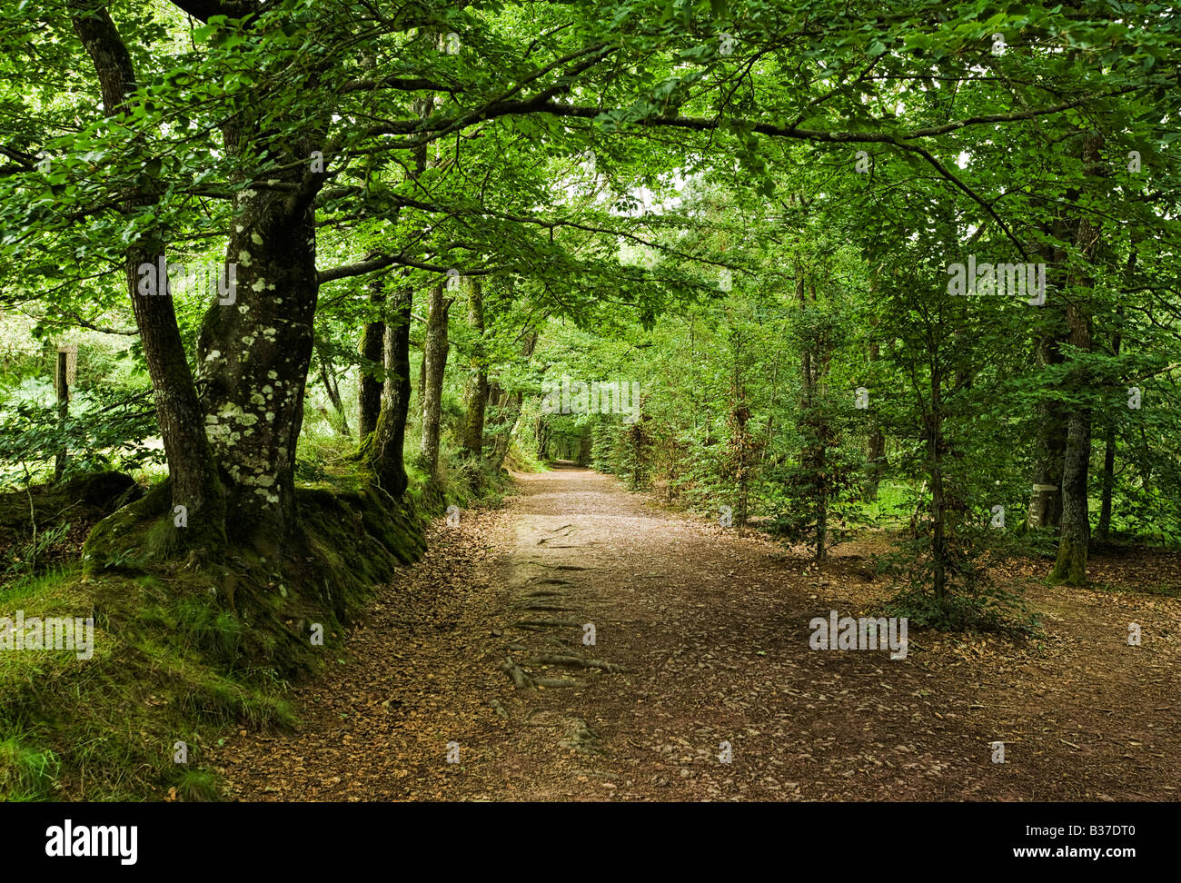 Woodland path through the enchanted forest at Broceliande forest, Ille et Vilaine, Brittany, France, Europe - Stock Image