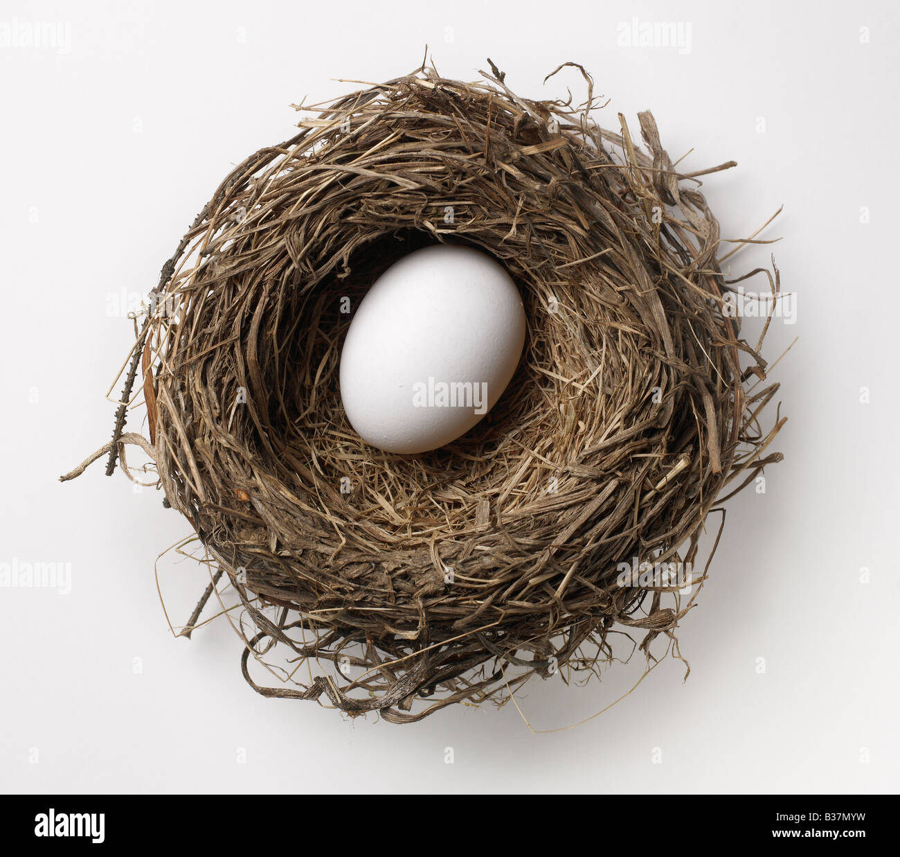 Birds nest - Stock Image