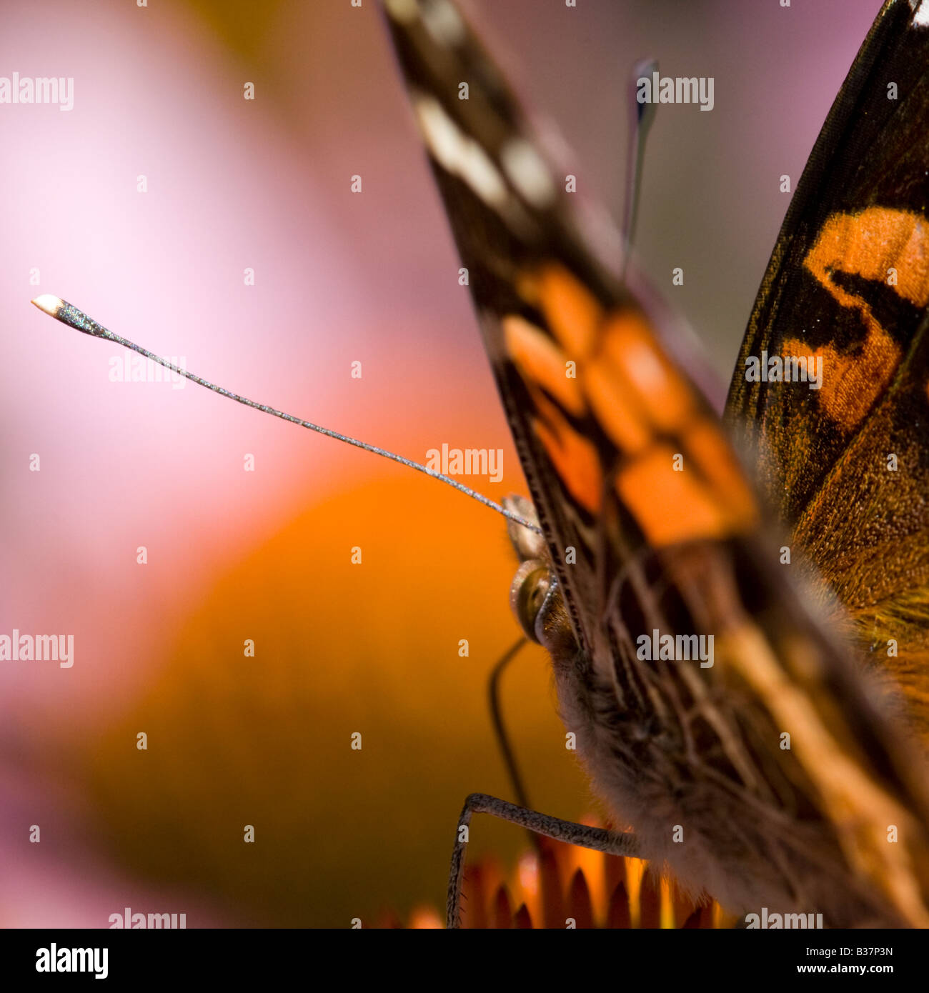 Macro image of a butterfly - Stock Image