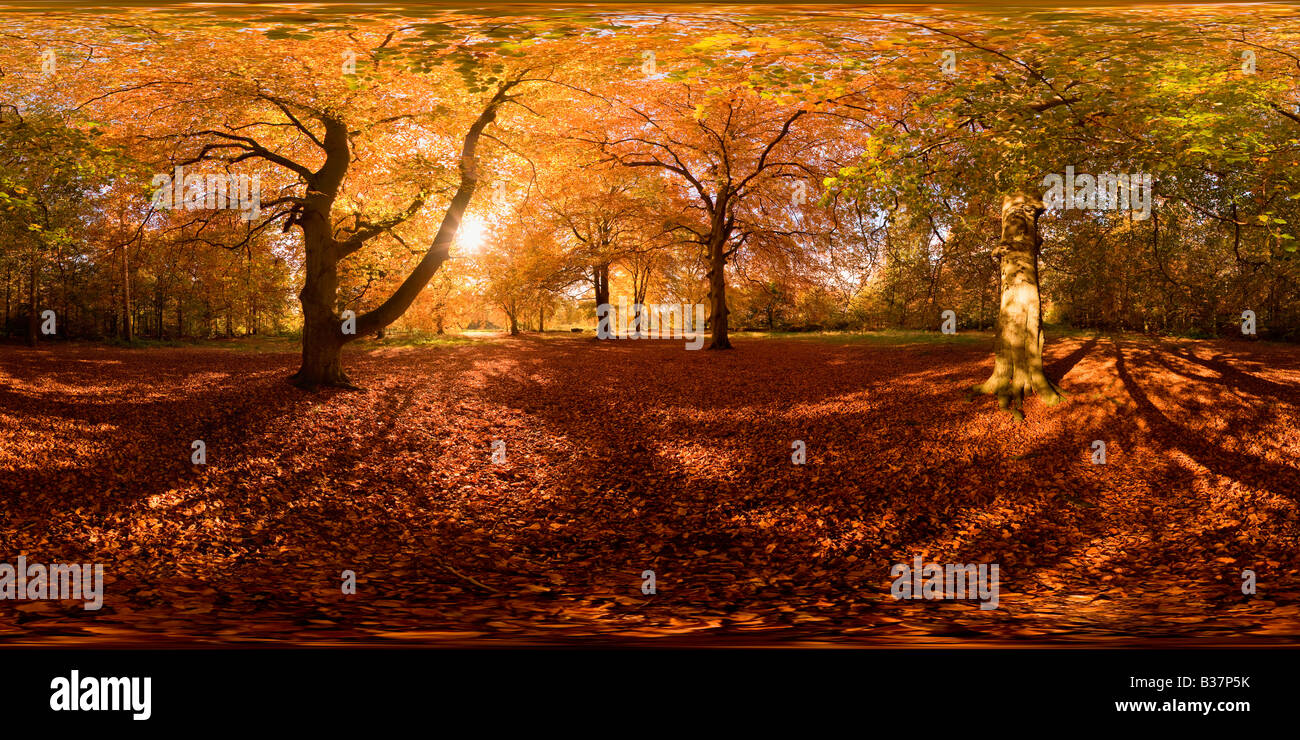 360 Degree Panoramic View Of Thetford Forest At Two Mile