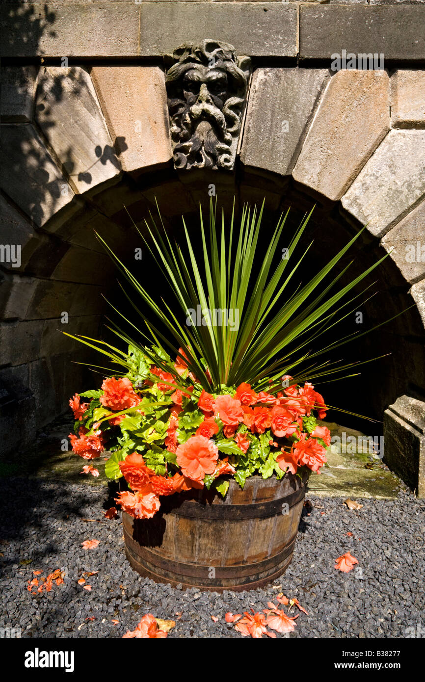 A Wooden Tub Filled With Begonias below a small decorative stone arch - Stock Image
