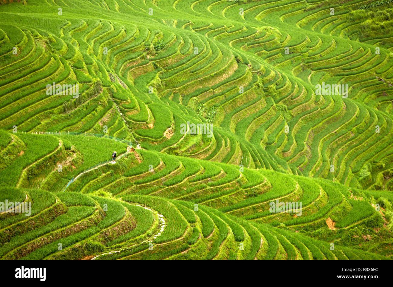 Ping An Rice Terraces Longsheng Longji Guilin China Building started in Yuan dynasty 1271 1368 Stock Photo
