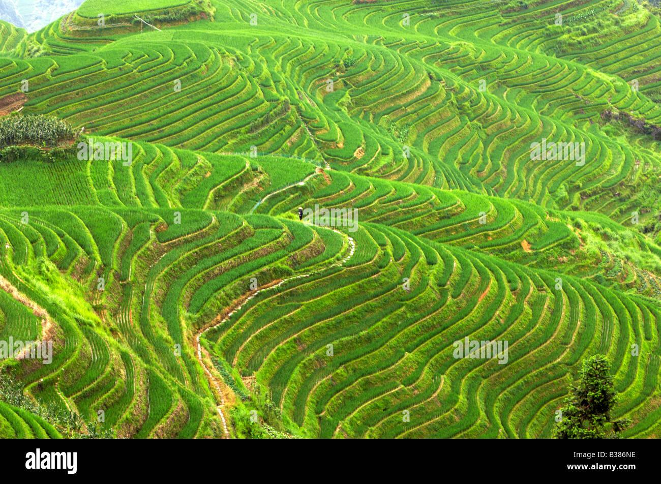 Ping An Rice Terraces Longsheng Longji Guilin China Building started in Yuan dynasty 1271 1368 - Stock Image