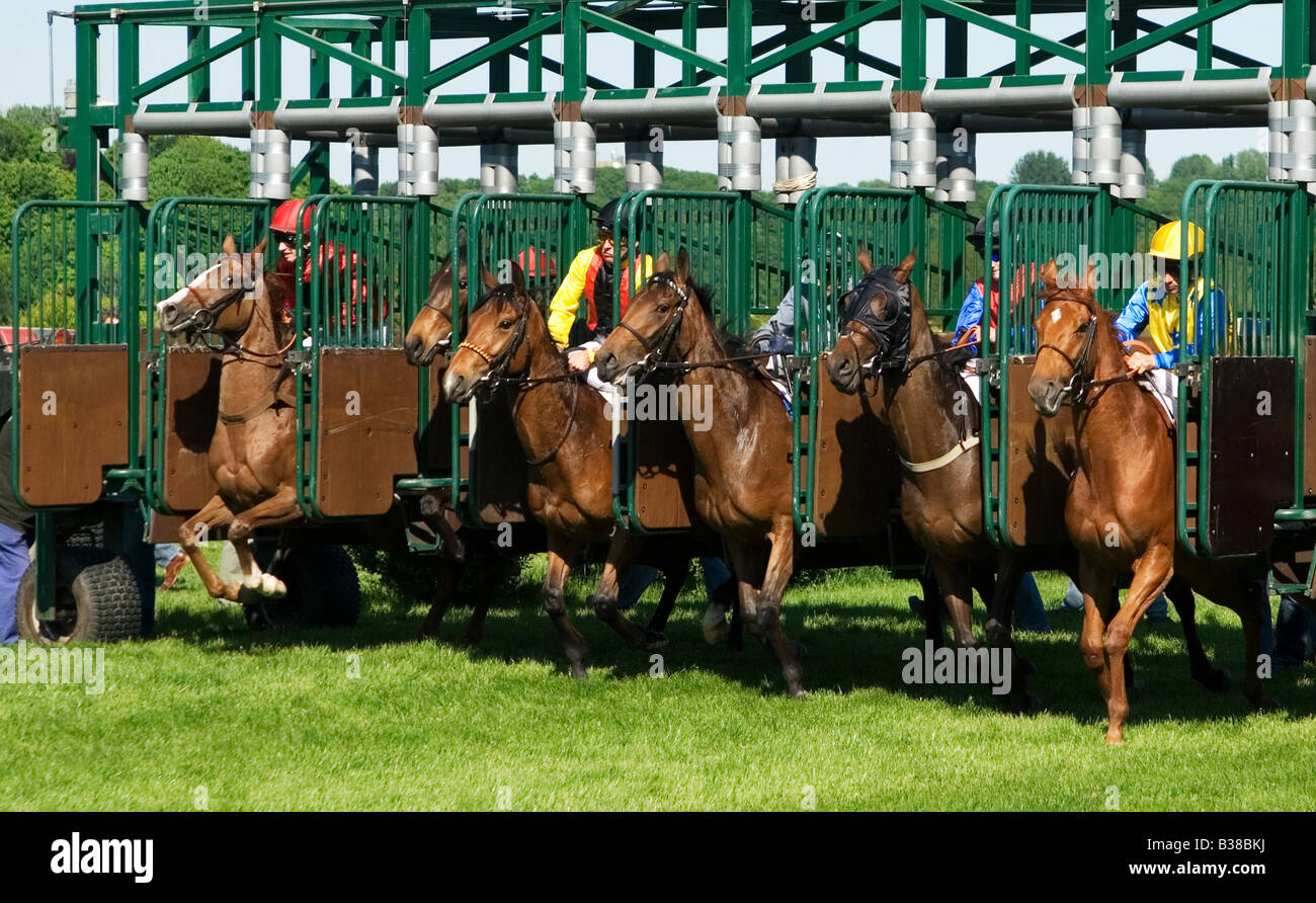 start of a horse race - Stock Image