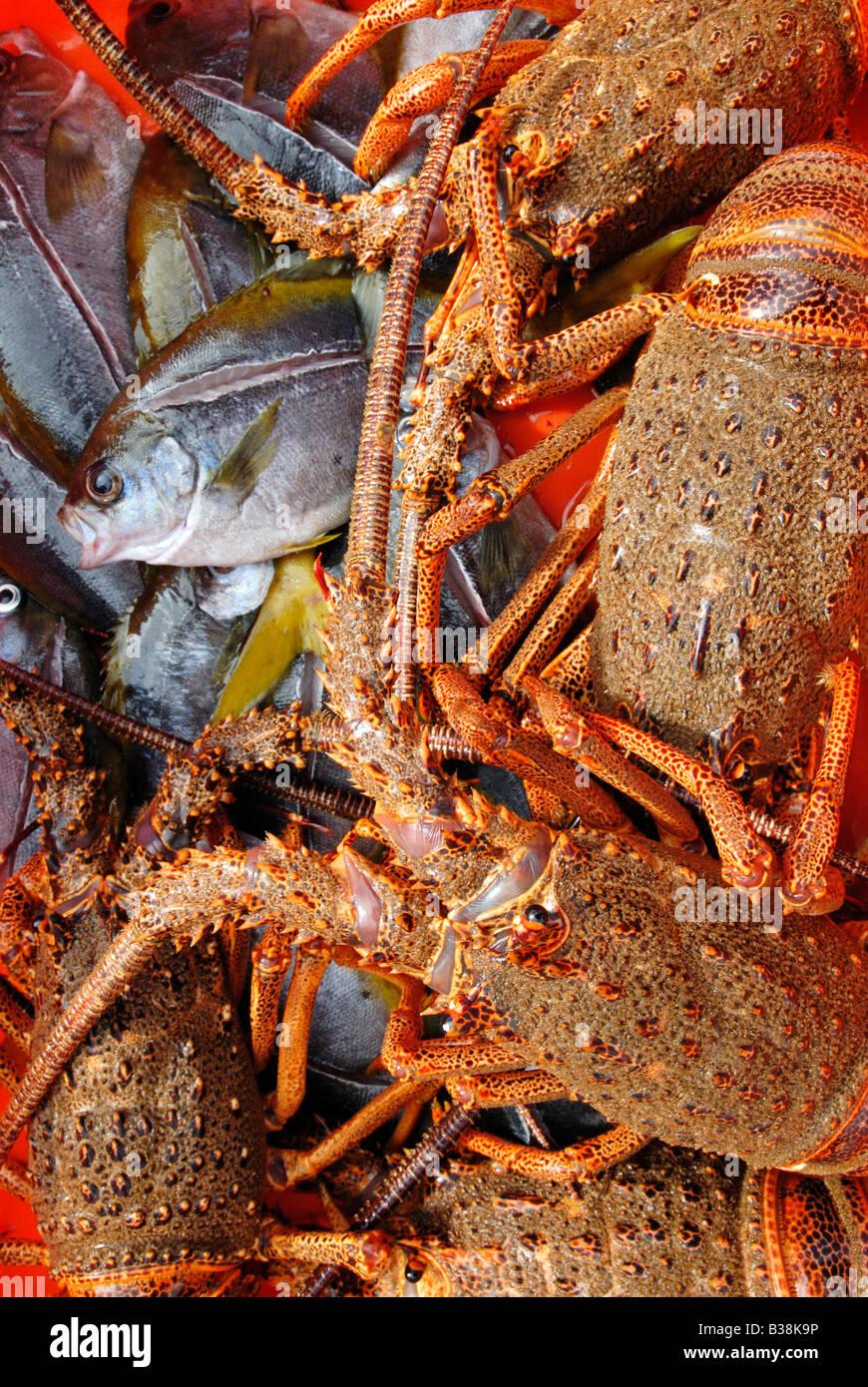 CHL Chile Juan Fernandez archipelago Robinson Crusoe Island 05 2007 Fish pampanitos and alive crayfish - Stock Image