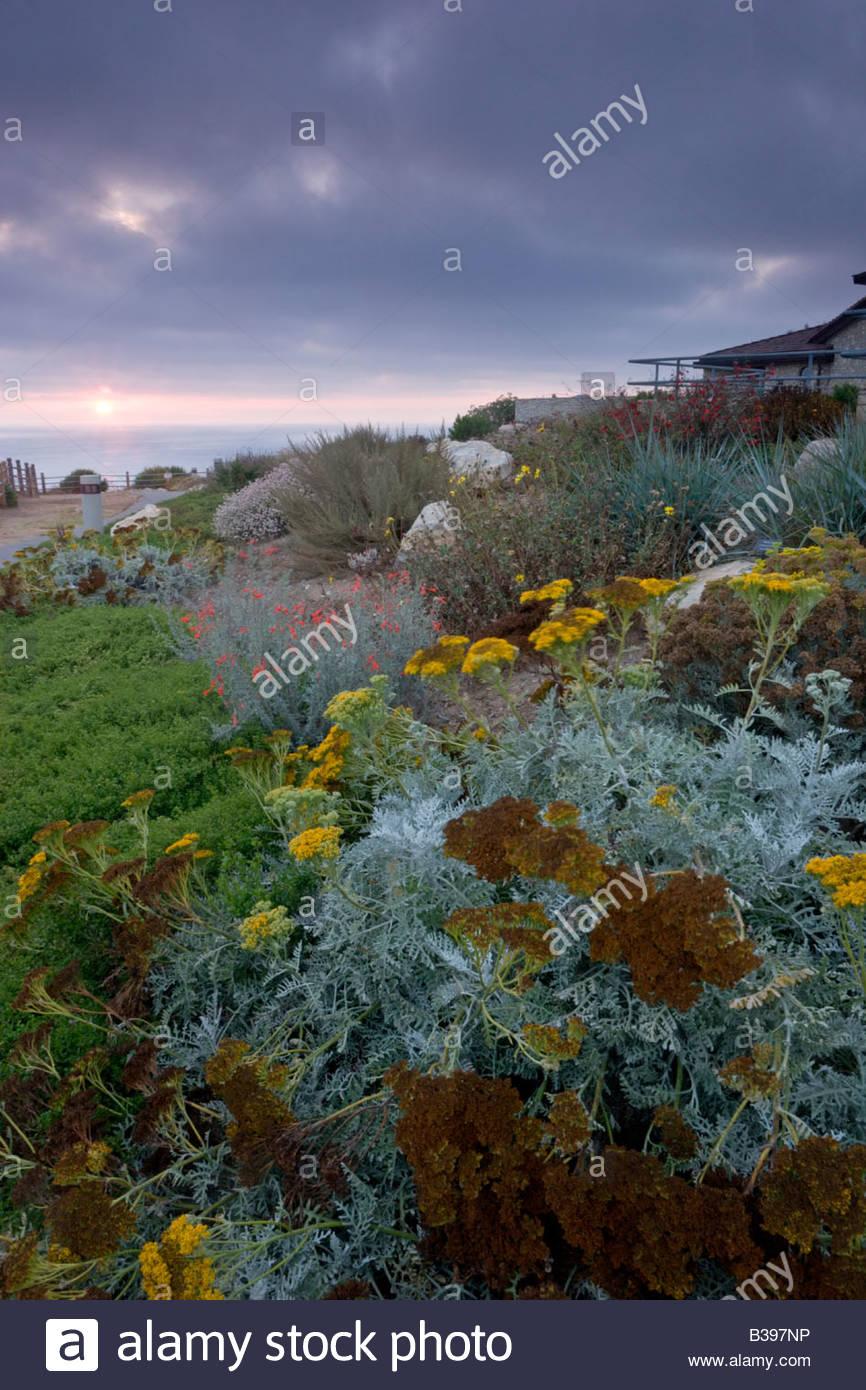 Garden at Point Vicente Interpretive Center Rancho Palos Verdes California - Stock Image