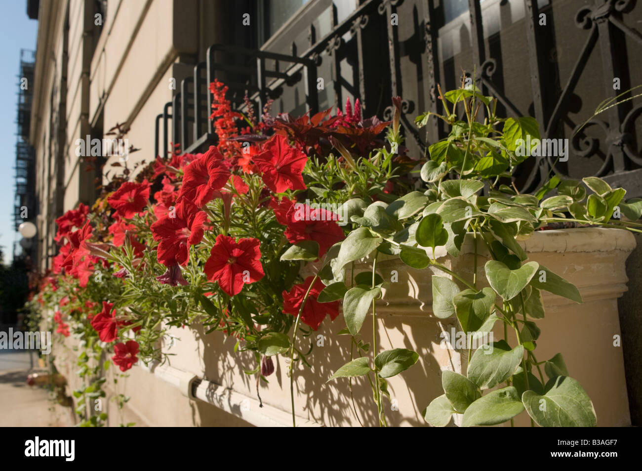 Flower Box on the Upper West Side - Stock Image