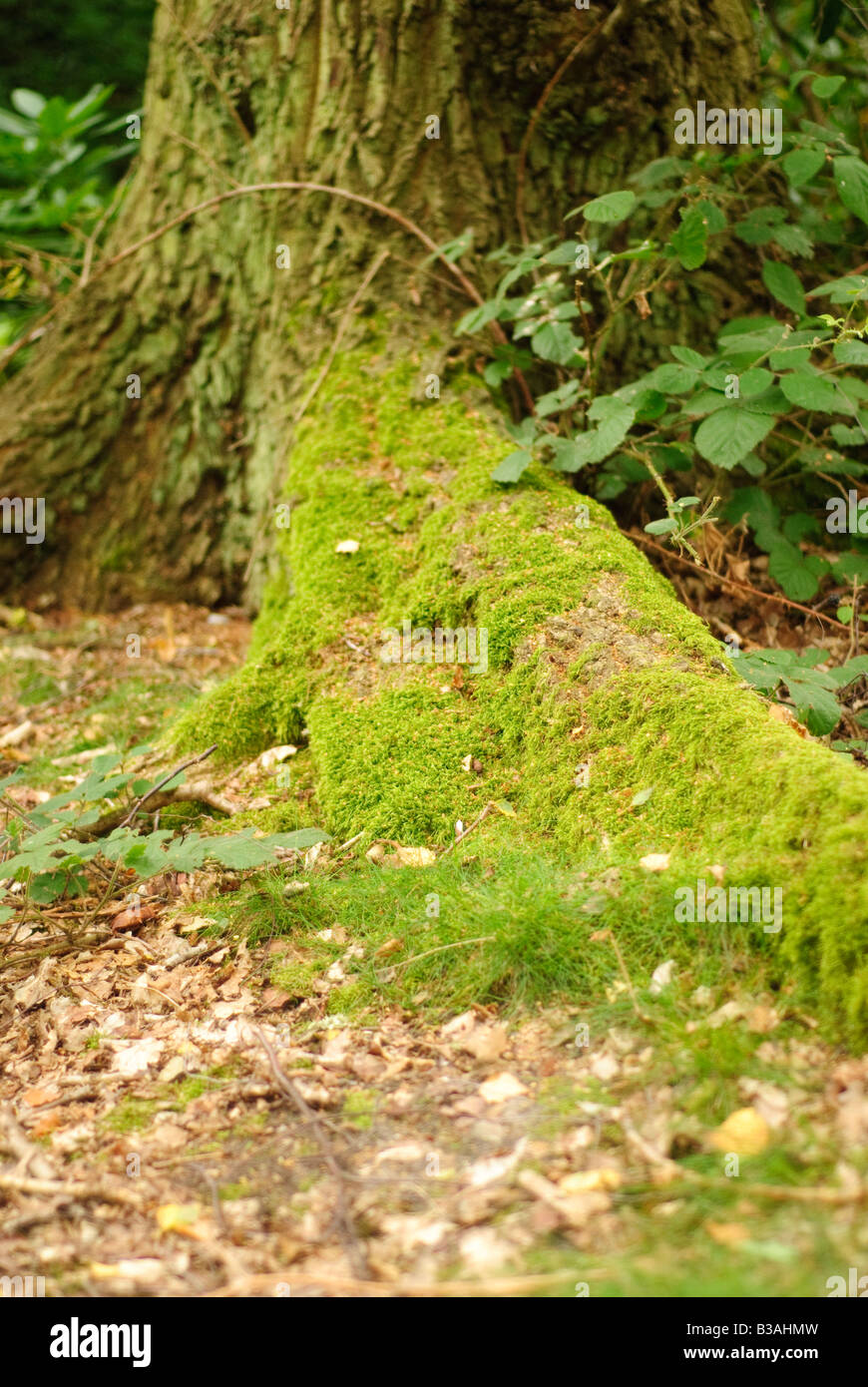 Moss on a tree stump Stock Photo