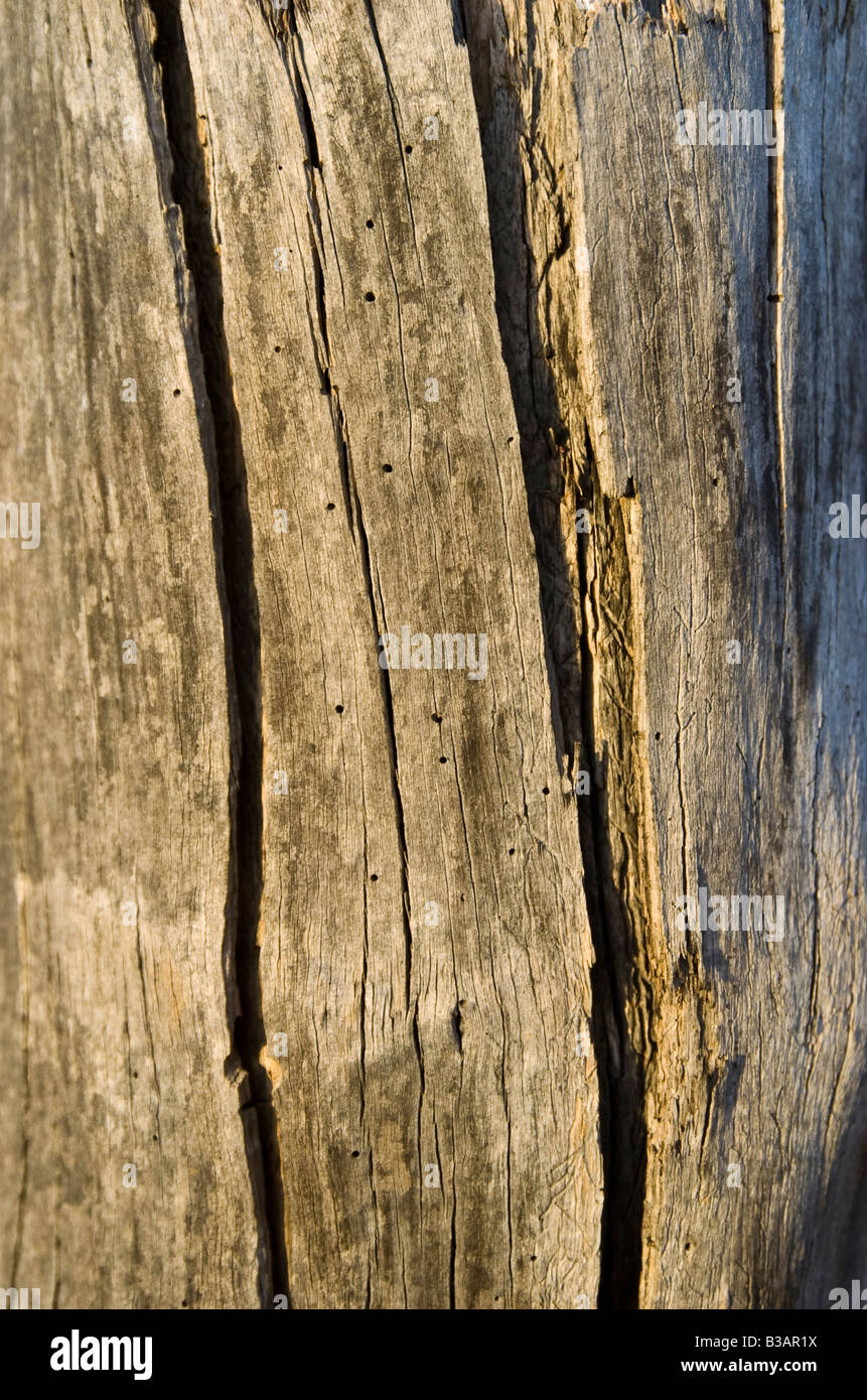 close up of old weather beaten fence post - Stock Image