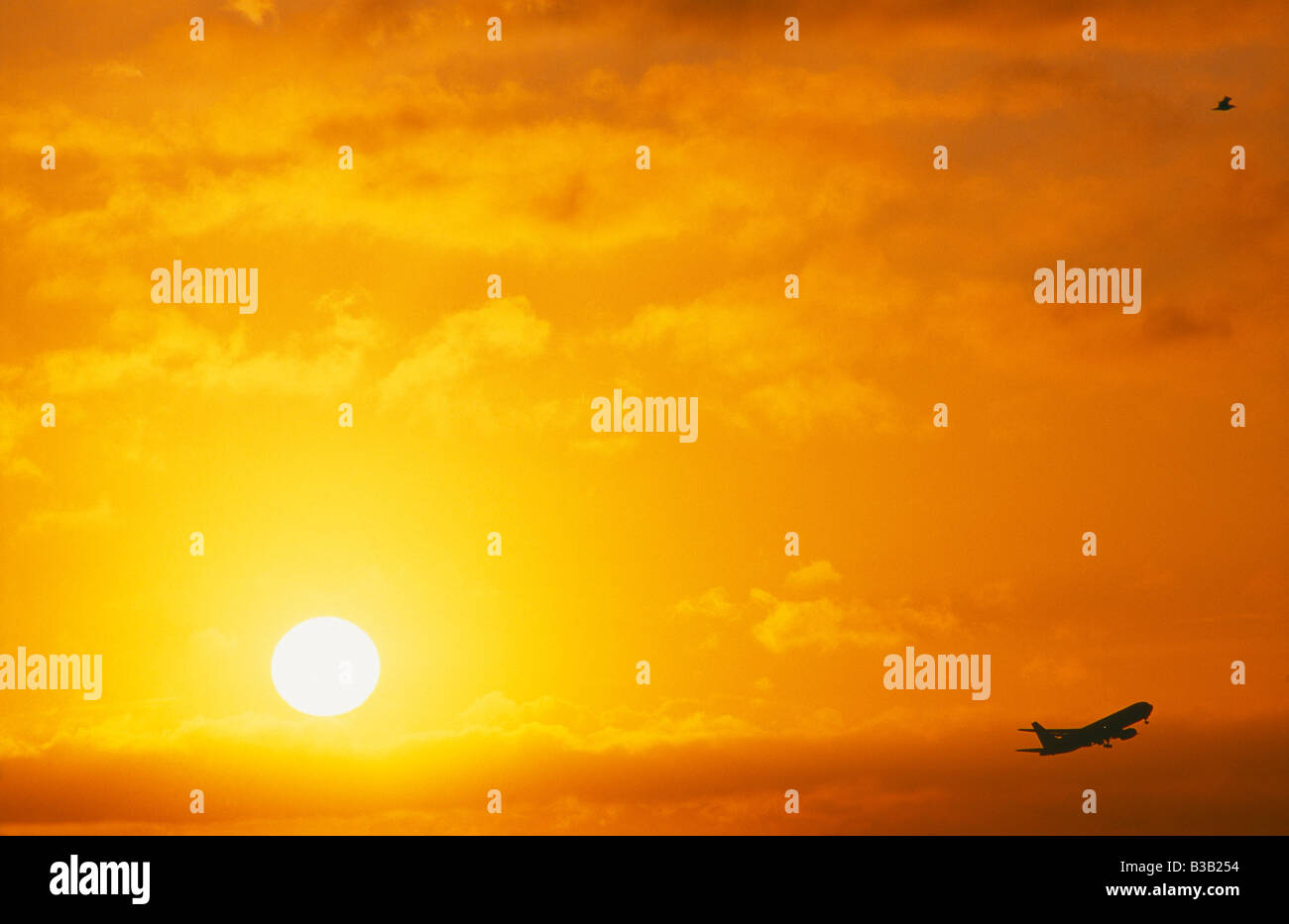 an aircraft taking off in front of the sunrise with a bird mirroring the plane, Heathrow, London, UK Stock Photo