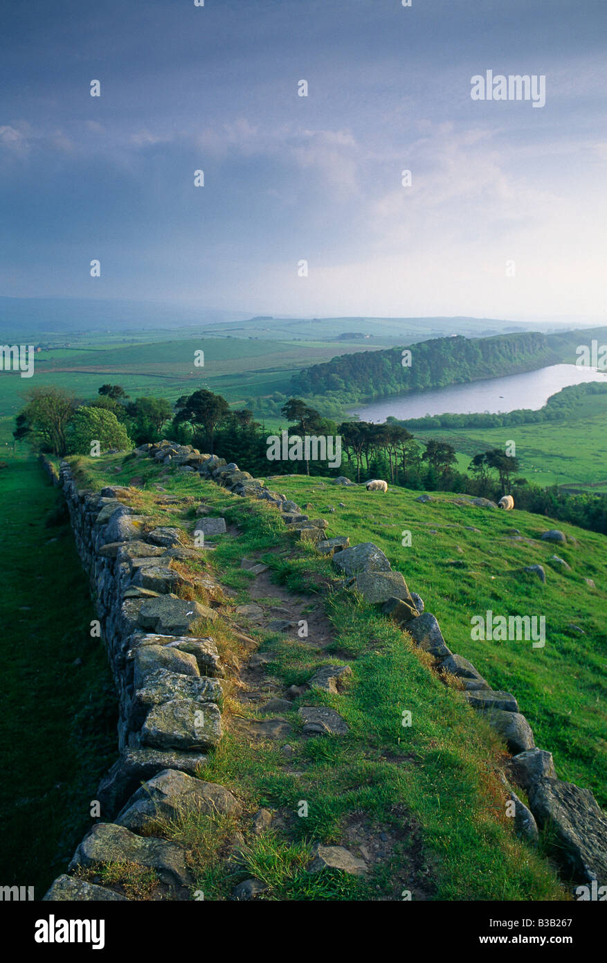 Hadrian's Wall at Hotbank, nr Housesteads, Northumberland, England, UK - Stock Image