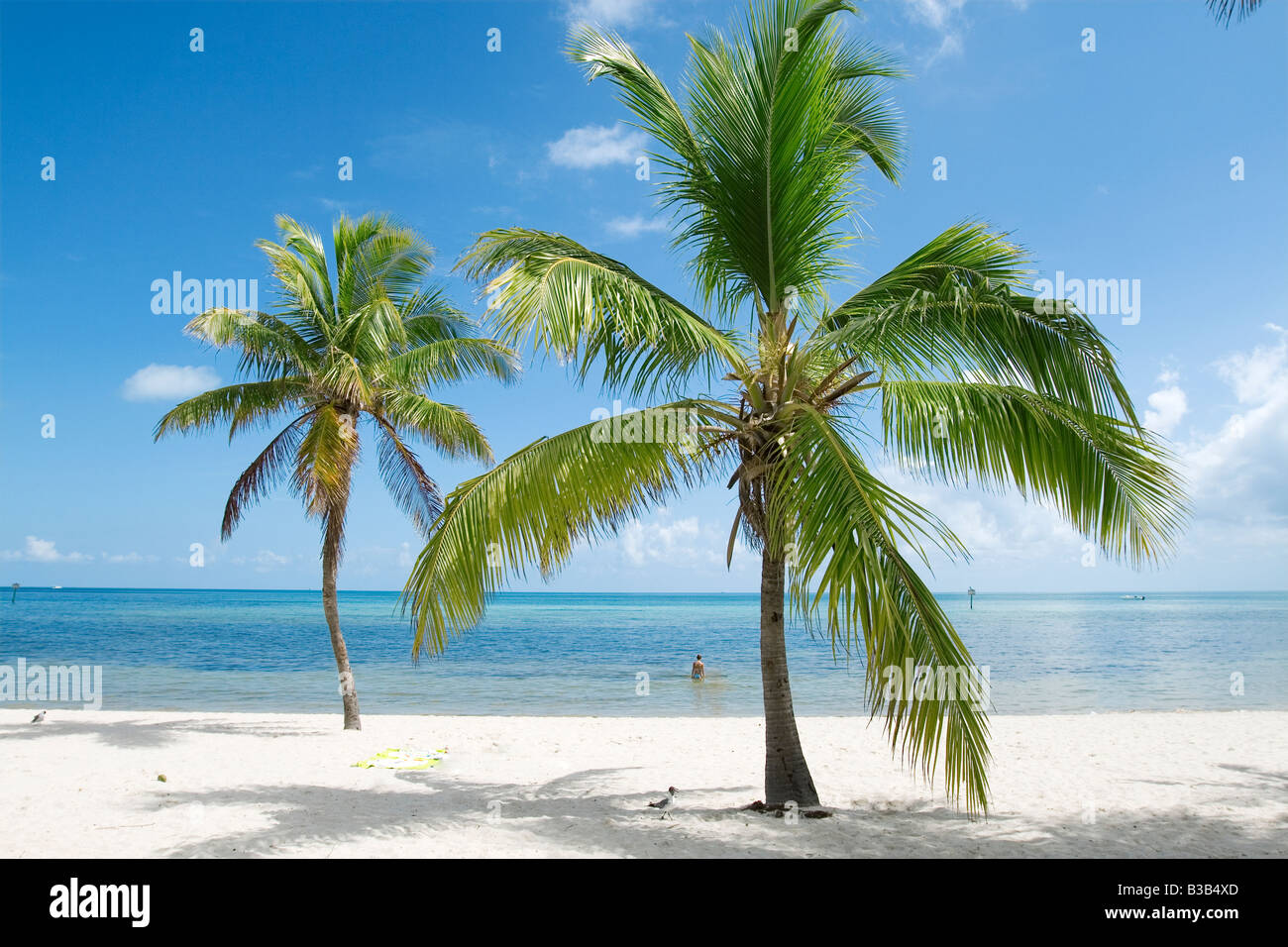 a tranquil and deserted white sand beach in Florida USA - Stock Image