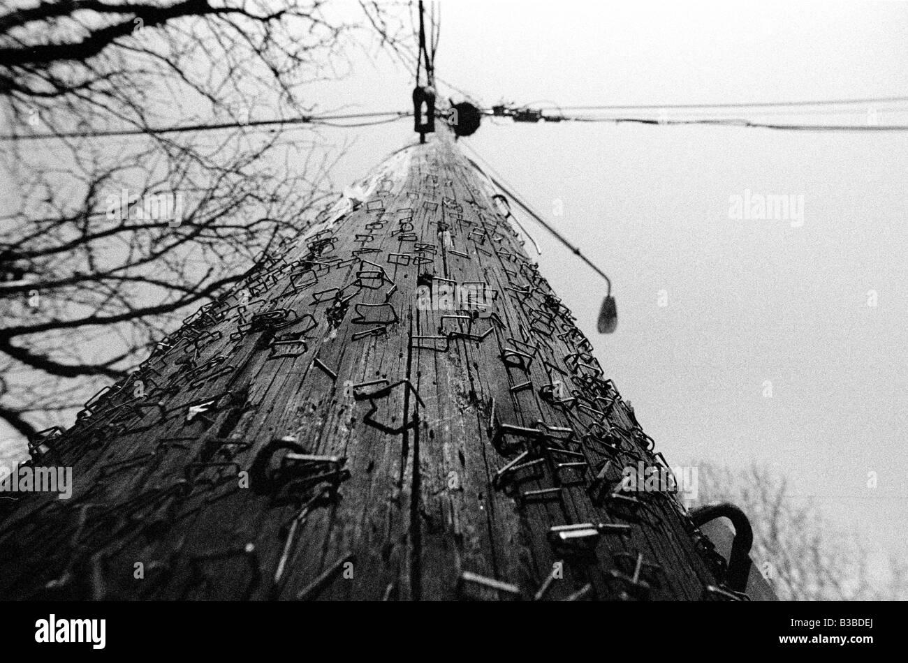 Photo of a light pole/telephone pole - Stock Image