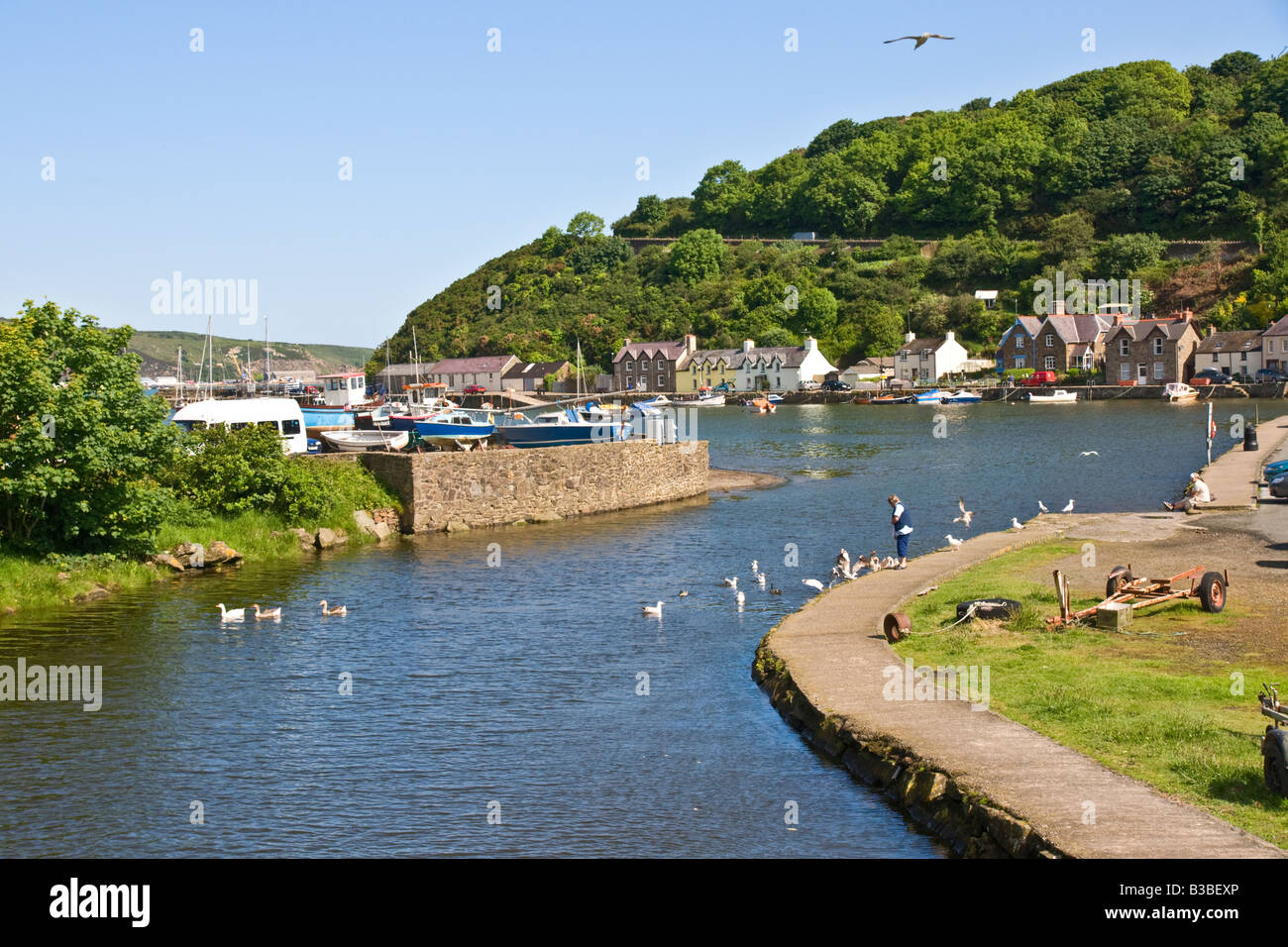Feeding the ducks at the Harbour, Lower Fishguard, Pembrokeshire - Stock Image