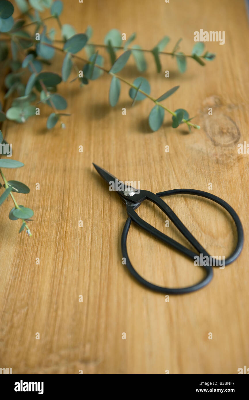 Scissor and plant - Stock Image