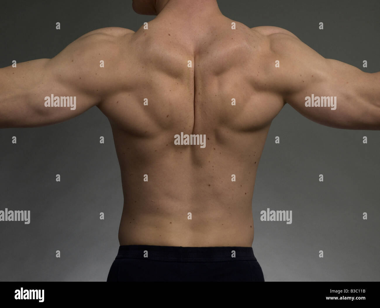 Defined Back Muscles Stock Photos & Defined Back Muscles Stock ...