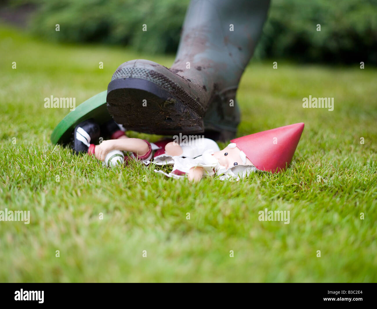 foot trampling   garden gnome stock photo