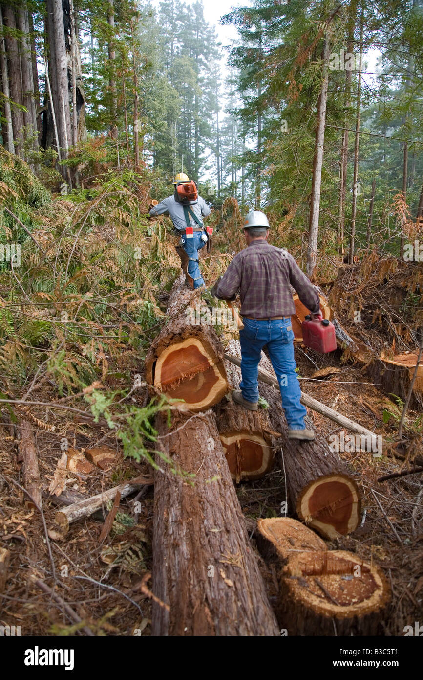 Logging of Redwoods in Northern California - Stock Image