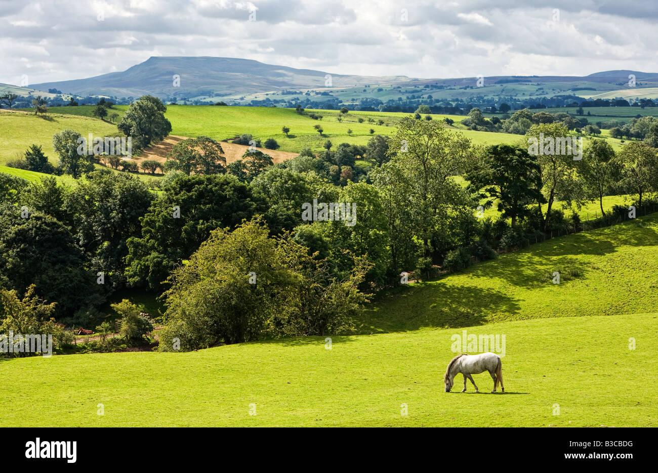 Teesdale countryside looking towards Pen y Ghent, North Yorkshire, England, UK - Stock Image