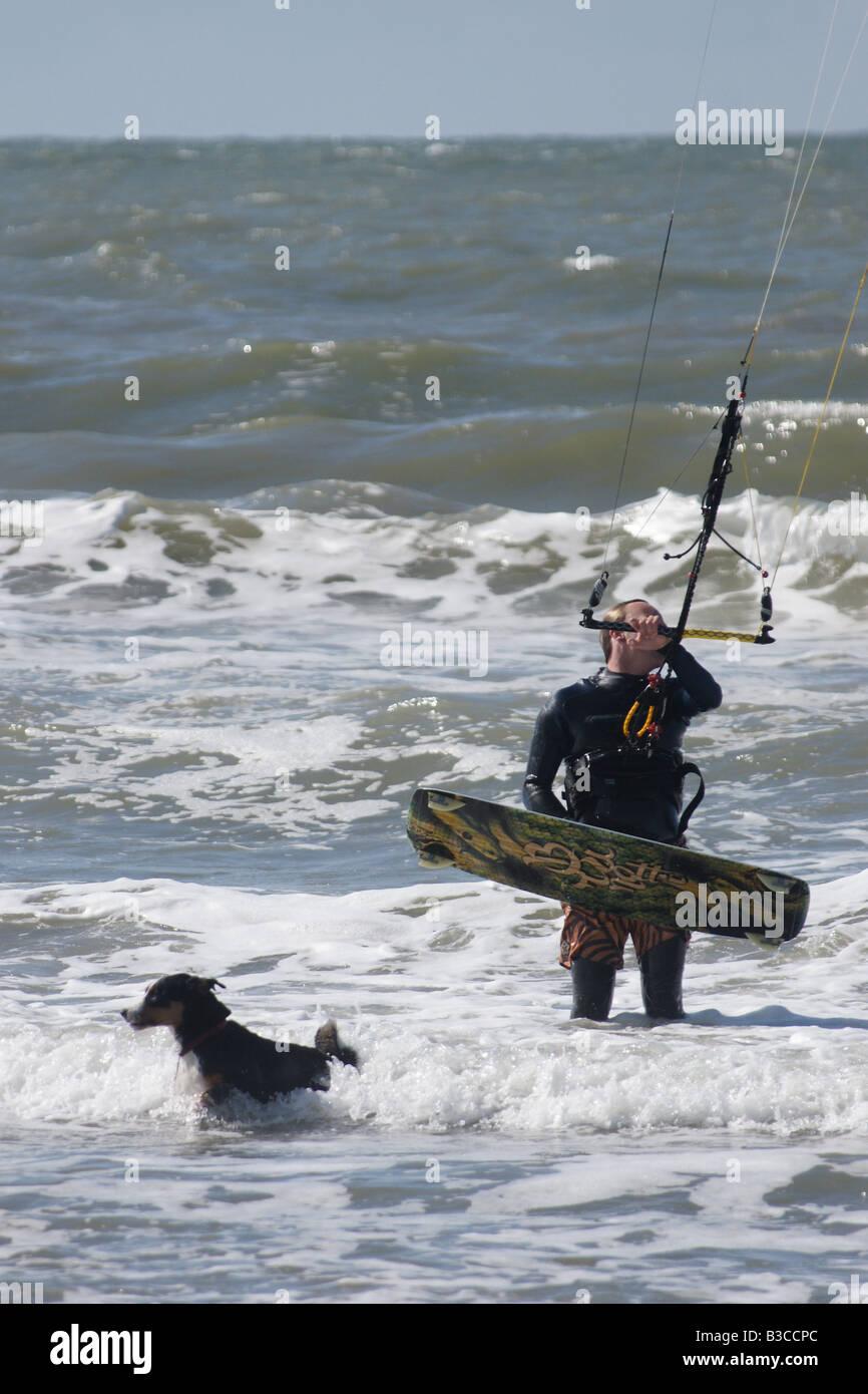 Man in neophrene suit surfing powerkite parafoil in sea with dog running away at Hoek van Holland, Netherlands - Stock Image