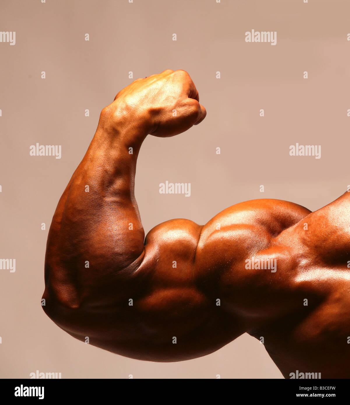 bodybuilder bodybuilders muscular arm biceps bicep fist muscle Stock ...