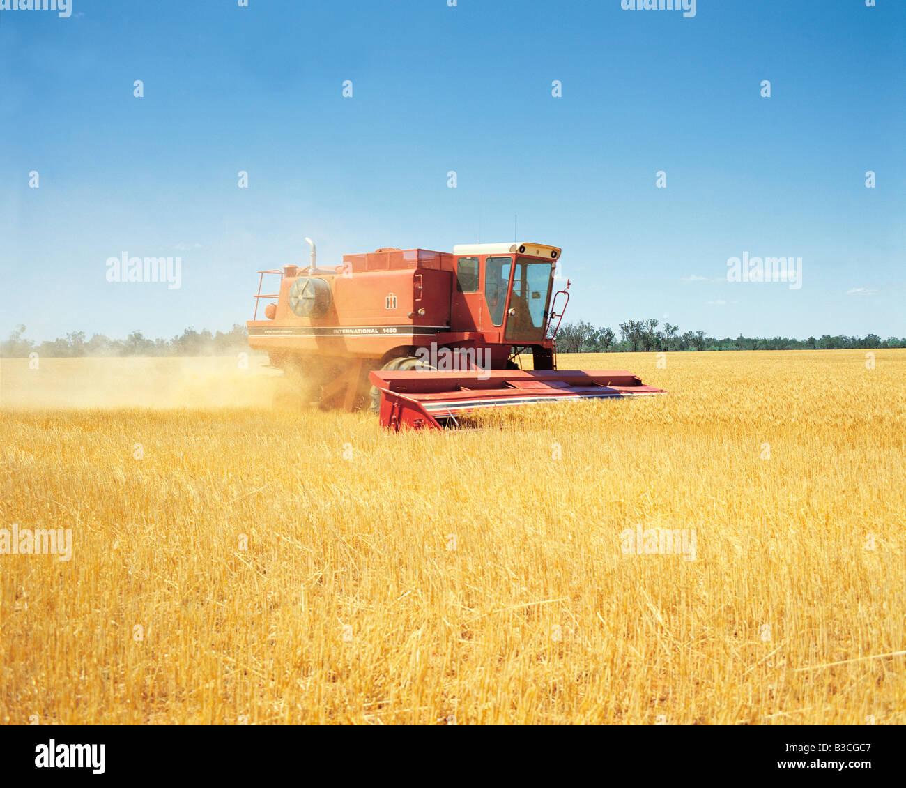 Combine harvester harvesting wheat crop in field. Australia. - Stock Image