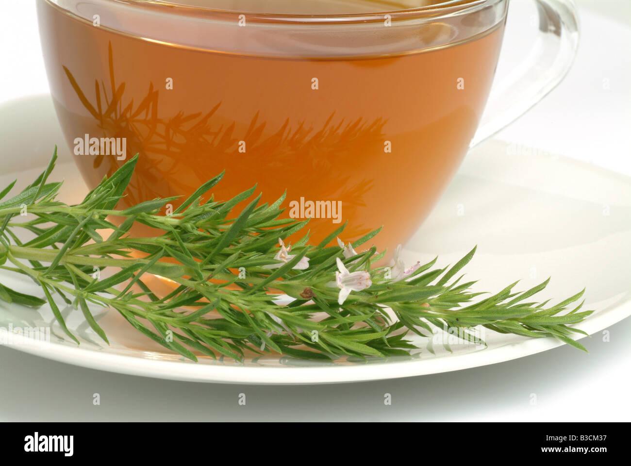 medicinal herbtea made of savory santoreggia satureja satureja hortensis - Stock Image