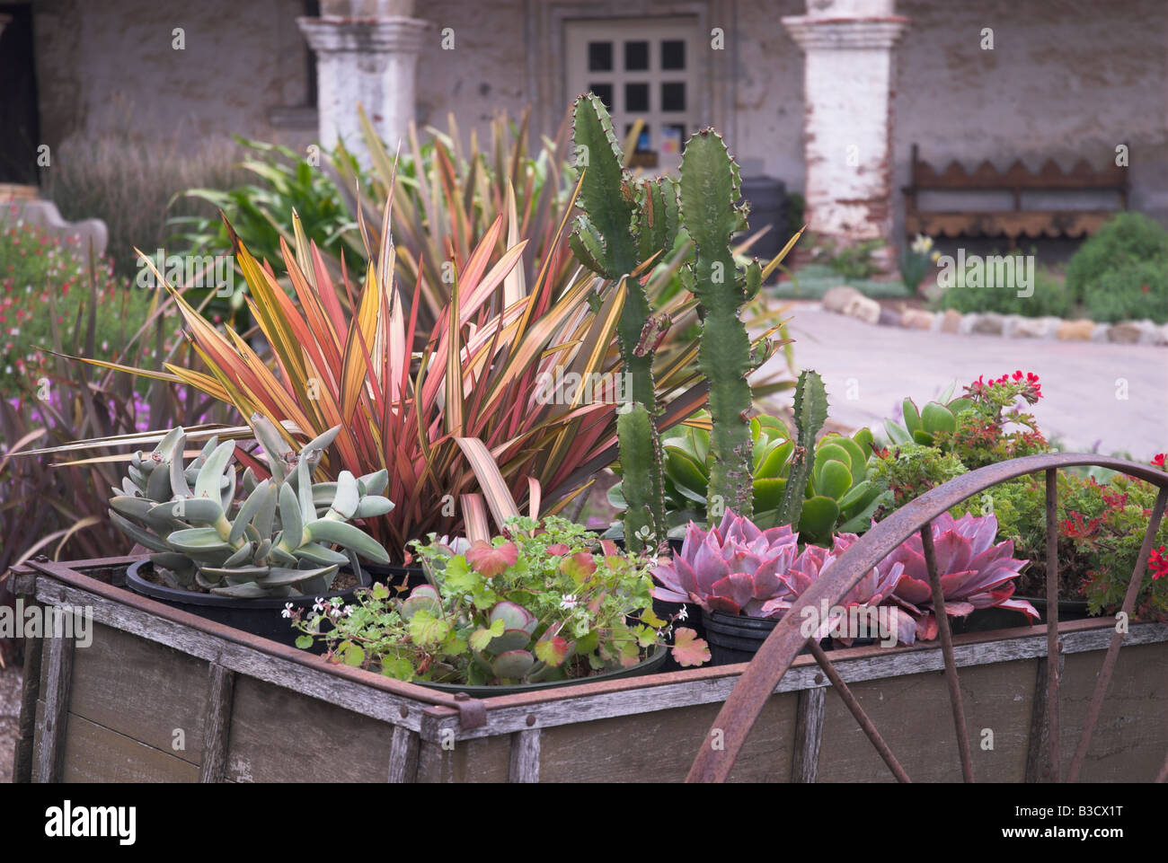 Wagon of desert plants at San Juan Capistrano - Stock Image