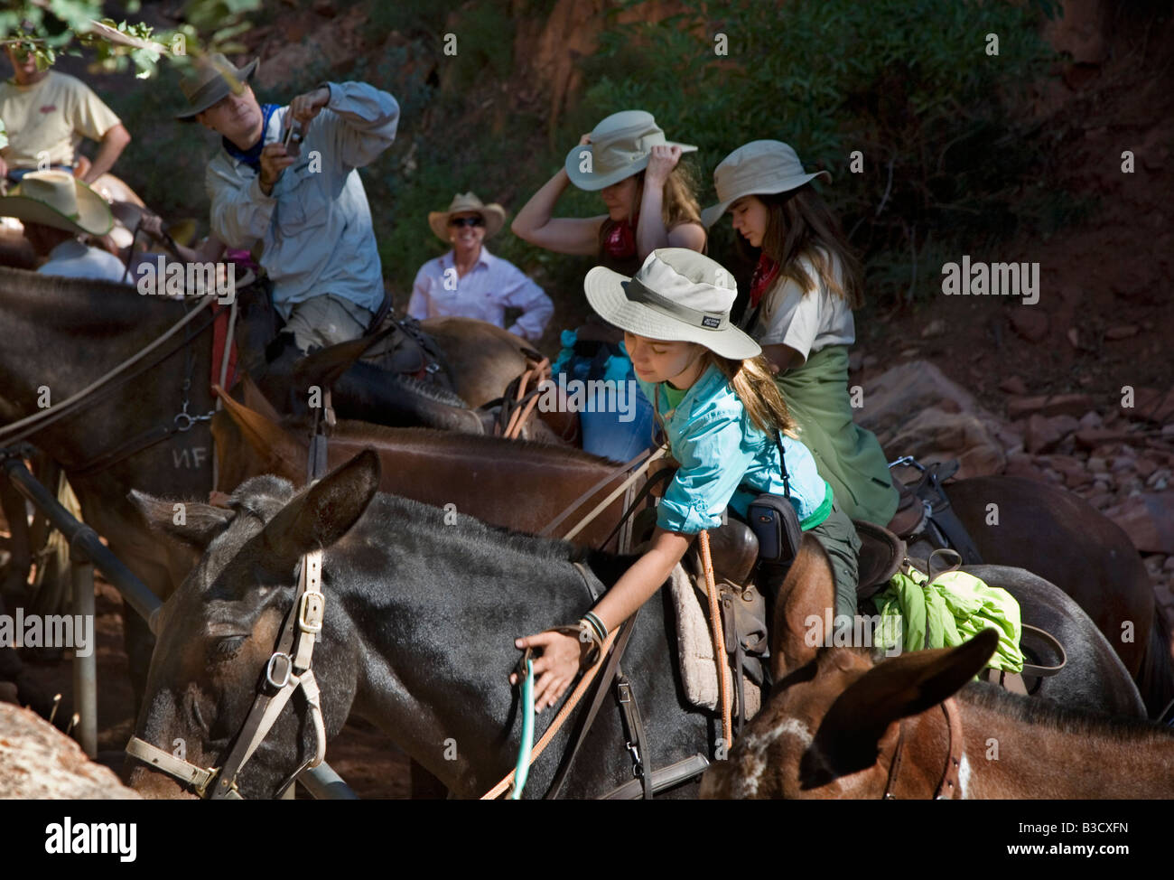 Mules on North Kaibab Trail in Grand Canyon Stock Photo