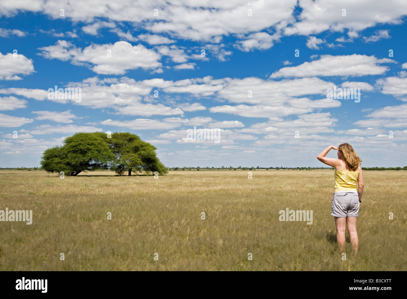 Africa, Botswana, Tourist looking at the landscape - Stock Image