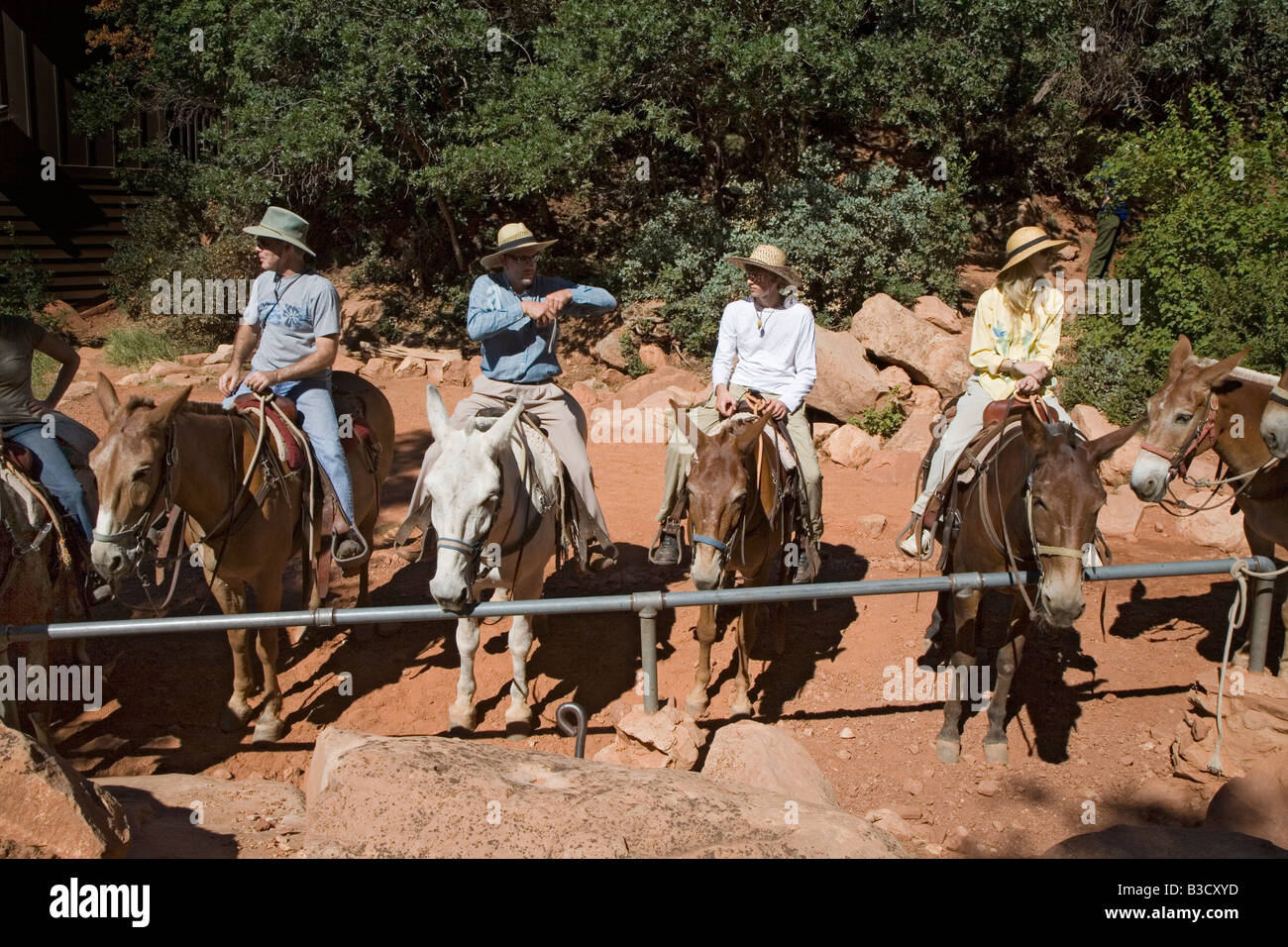 Mules on North Kaibab Trail in Grand Canyon - Stock Image