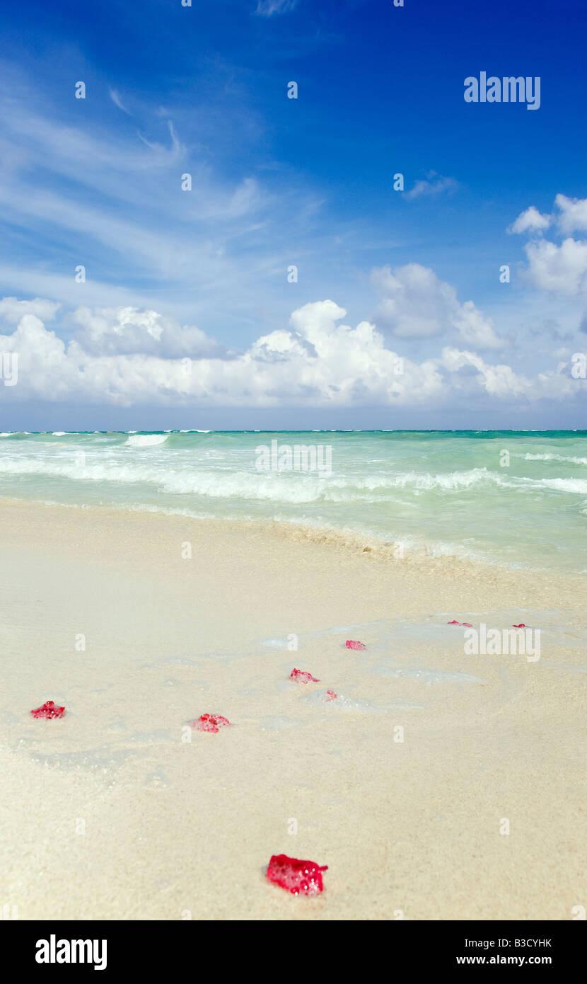 Mexiko, Yucatan, Petals on the beach - Stock Image