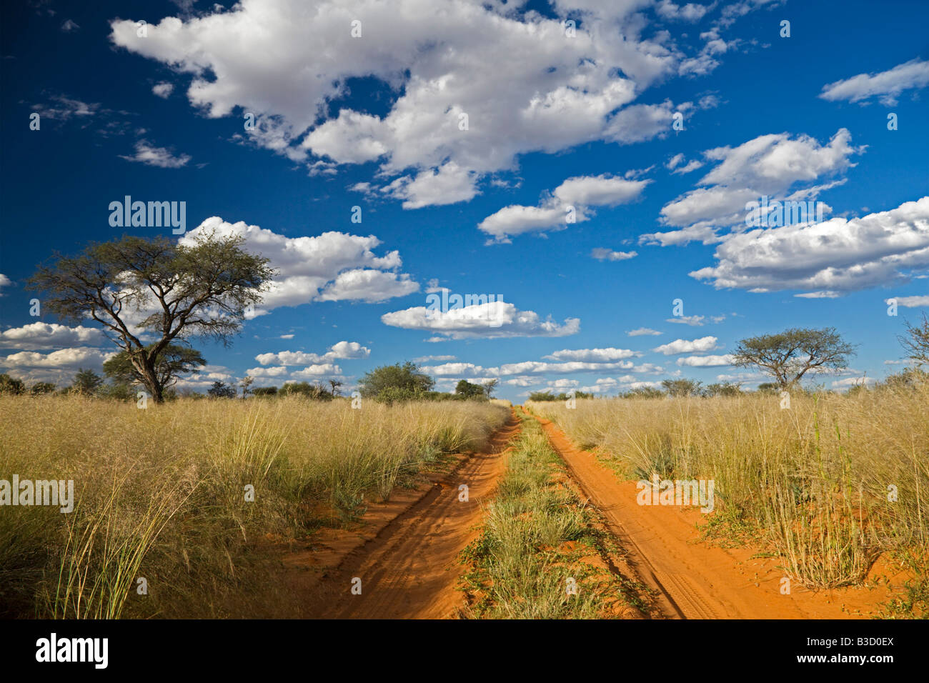 Africa, Botswana,Track through Kalahari Desert - Stock Image