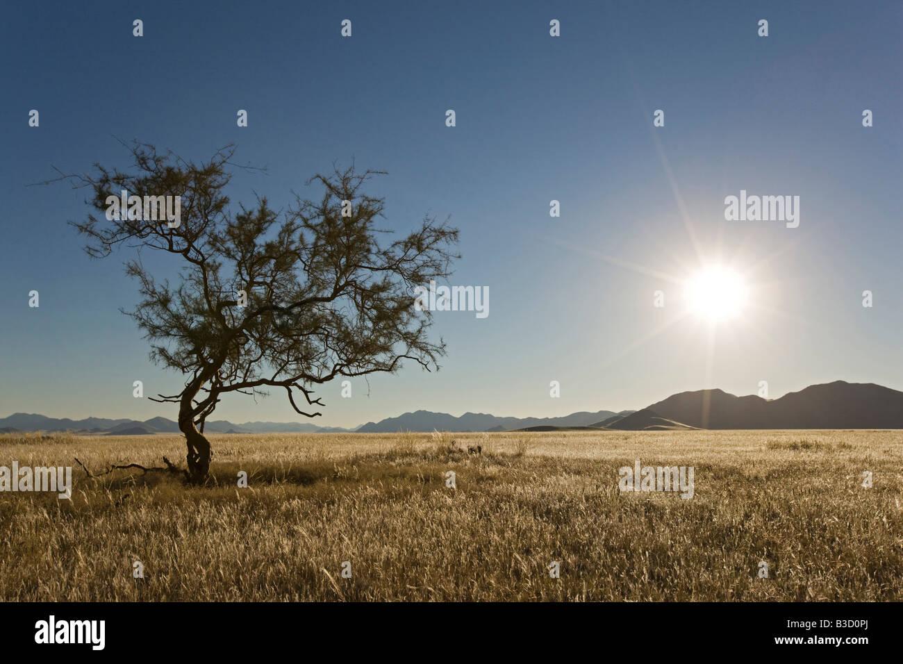 Africa, Namibia, Grass land - Stock Image